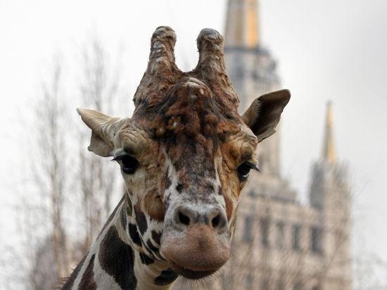 В зоопарке начался осенний «листопад» цен