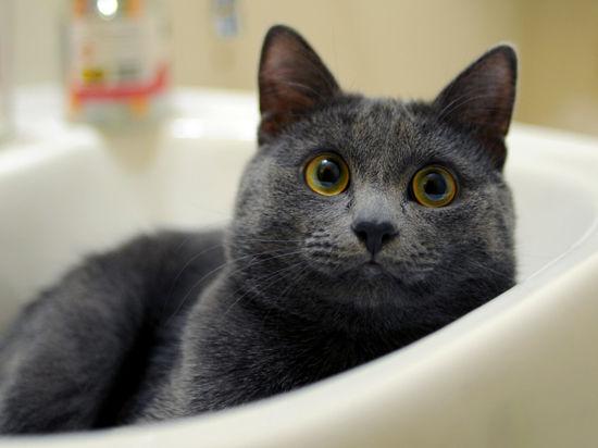 На месте человека кот провалился в дыру