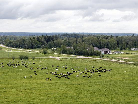 100 дней главы Луховицкого района:  первые безрадостные итоги для фермеров