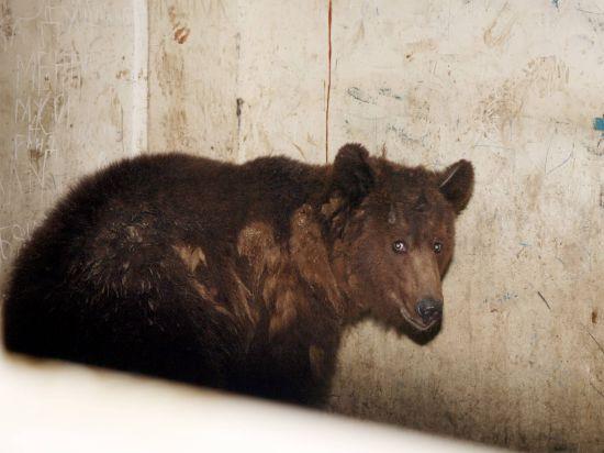Медведь покалечил ребенка на базе отдыха под Ростовом