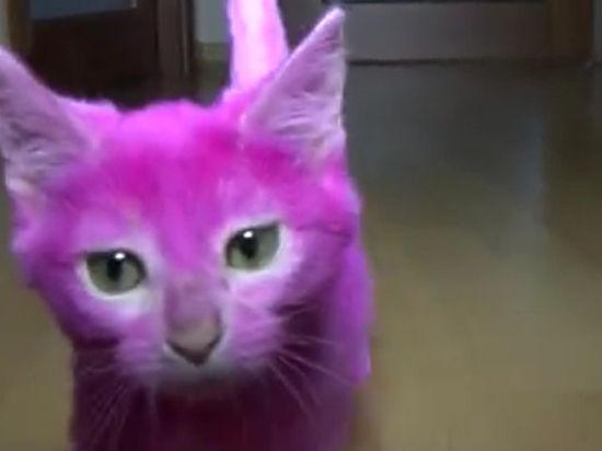 Лене Лениной вменяют в вину смерть покрашенного в розовый цвет котенка
