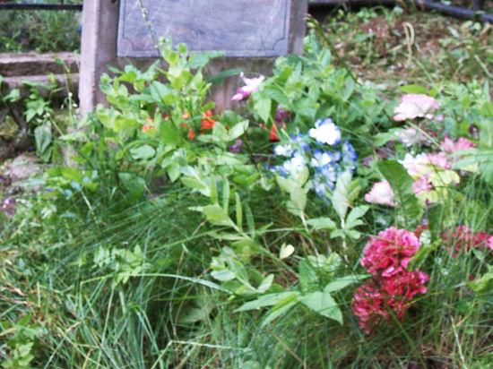 В Москве хотят заново разрешать захоронения в бесхозных могилах