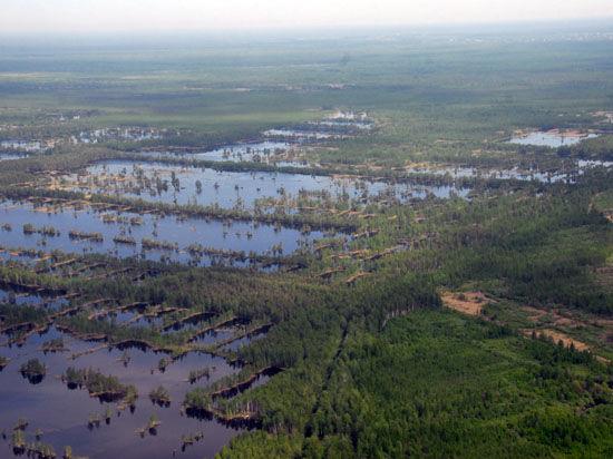 Украина нашла газ на болоте