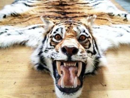 Тигр за девушкам секс