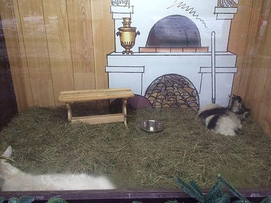 Московский зоопарк выступил в защиту зверей, которых держат в витринах на Тверском бульваре