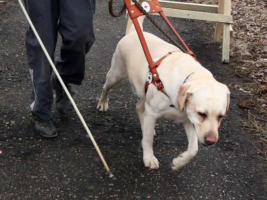 Собаки-поводыри смогут отдохнуть от работы на стадионе