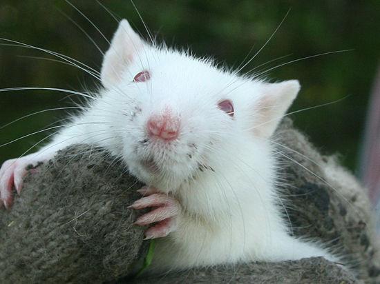 Почему в России мышей и кроликов продолжают приносить в жертву косметической индустрии