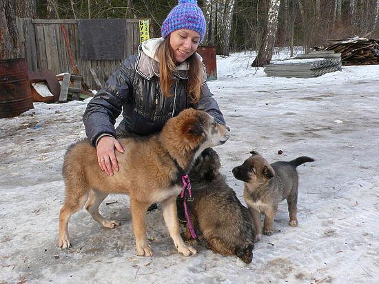 Приют для собак доказал, что нужен Протвино
