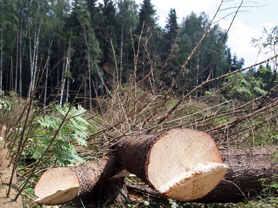Два лесопарка в Москве не повторят судьбу Химкинского леса