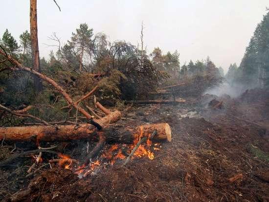 Власти Приангарья убеждены, что лесозаготовкам не место во время пожаров