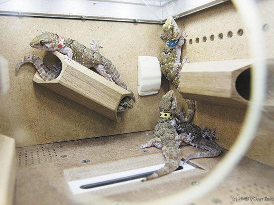 Что стало причиной смерти ящериц, так и осталось тайной