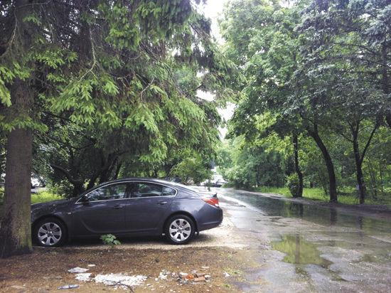 Десятки живых деревьев в Новой Москве вырубают под видом «сухостоя»