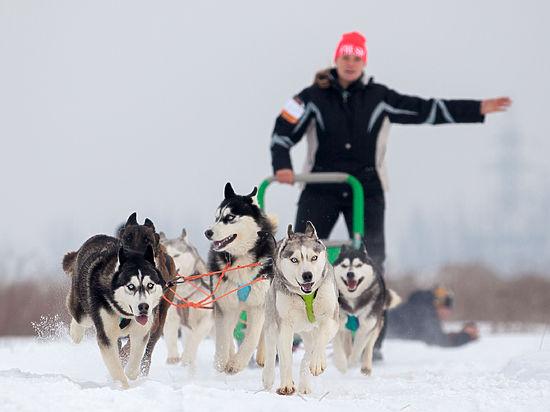 В Казахстане впервые прошли соревнования по ездовому спорту на собачьих упряжках