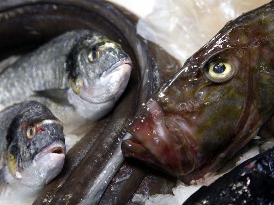 Норвежские ученые научились превращать отходы электростанций в рыбий жир