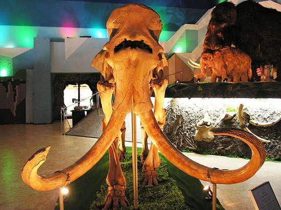 На ВДНХ закрыт уникальный музей мамонтов