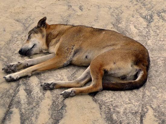 Москвичка выбросила собаку из окна за непослушание