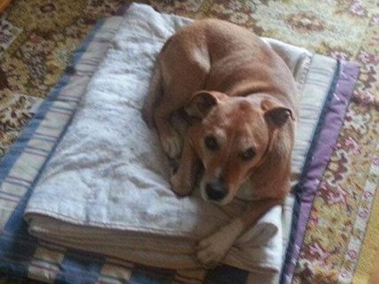 Ученый с мировым именем объяснил, почему нельзя усыплять испанскую собаку с подозрением на Эболу