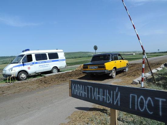 Из-за чумы свиней в Смоленской области введен режим