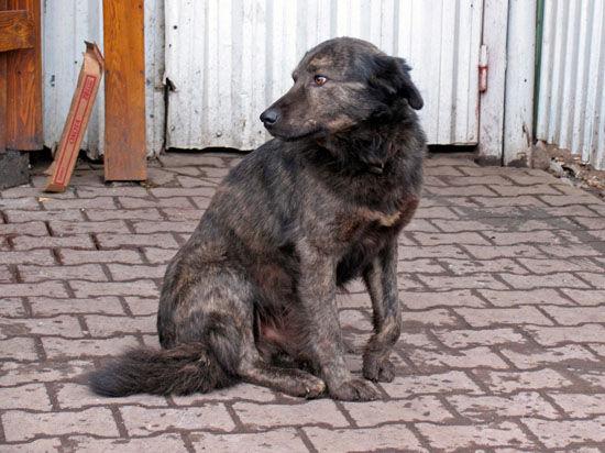 Охотники на бездомных собак в Перми учат воспитанников интернатов убивать животных
