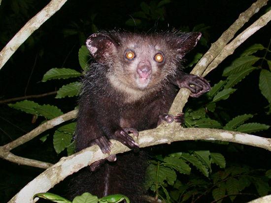 Редкие и вымирающие: несколько удивительных представителей фауны, о которых вы могли и не знать