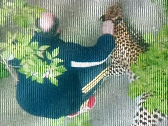 ЧП на севере Москвы: сотрудник охранной фирмы удерживает в подвале леопарда