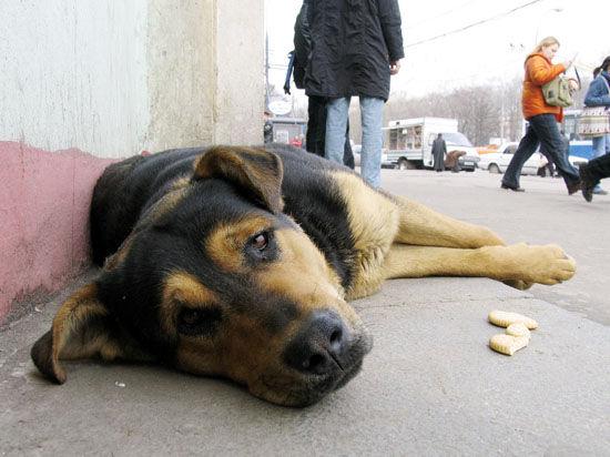 Собаки Рузского района самые кусачие