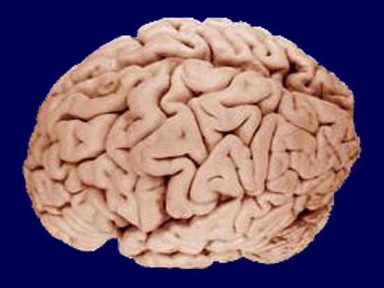 Жидкие мозговые импланты способны улучшить наш интеллект