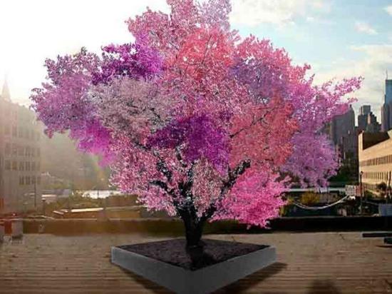 Ученый вырастил на одном дереве сразу 40 видов фруктов