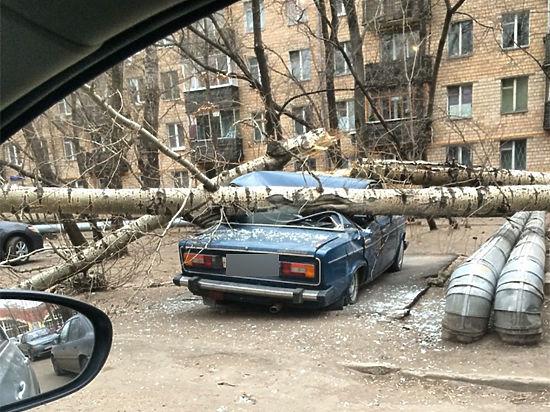 В Москве бушует стихия: ураган повалил десятки деревьев, повреждены электролинии