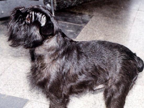 Акция по освобождению щенка от хозяина-тирана превратилась в грабеж