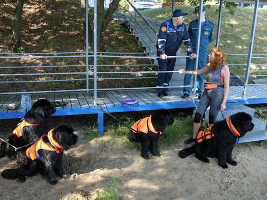 Утопающих в Москве будут спасать ньюфаундленды