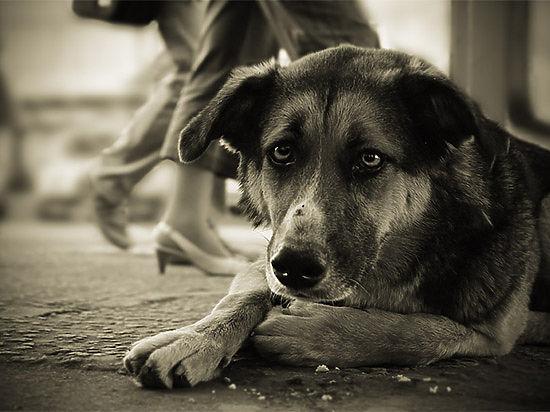 Бездомные животные Улан-Удэ страдают от голода и холода в приюте, созданном для их передержки перед усыплением