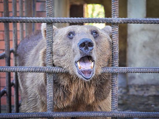 Медведей в Сочи убивают пивом