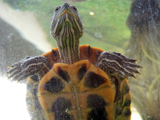 Московский ветеринар спас на отдыхе черепаху
