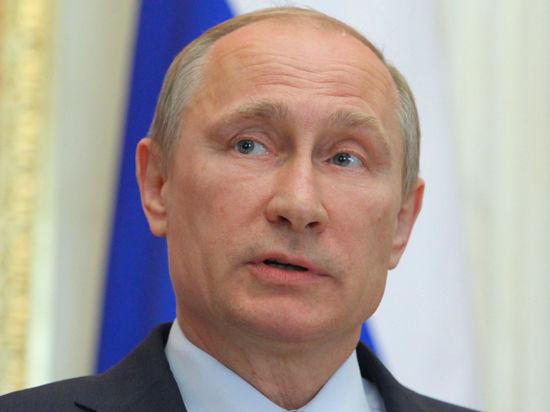 Амурские тигры Боря, Кузя и Устина подготовились к встрече с Владимиром Путиным