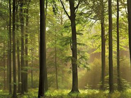 На защите леса