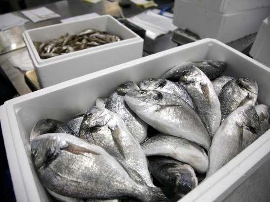 Норвегия не знает, куда деть 300 тысяч тонн рыбы, предназначенной для России