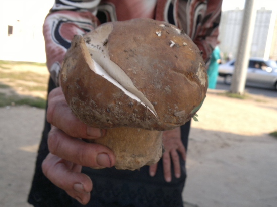 Глобальное потепление спровоцировало появление в лесах Финляндии новых видов грибов