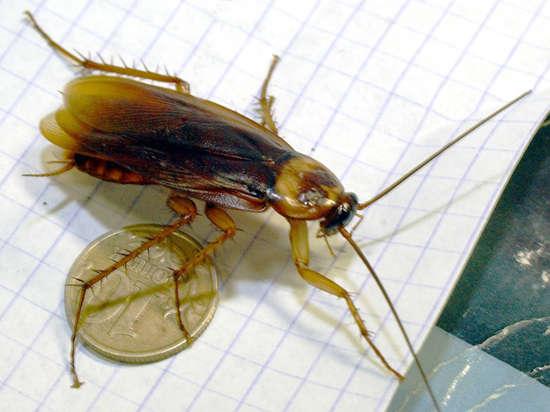 Москвичка потравила соседей вместе с тараканами