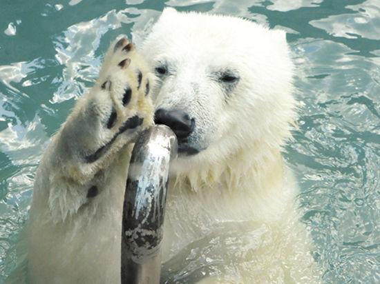 Как спасаются от жары в Московском зоопарке