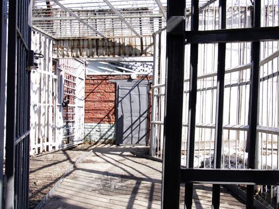 Обвиняемый в убийстве Егора Щербакова может сесть на 18 лет