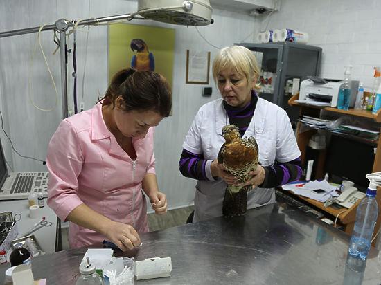 В Москве поймали редкую птицу - глухаря