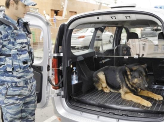 Полицейские собаки смогут освежиться по дороге  на задание