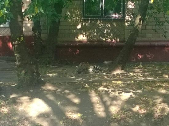 Леопарда Лину с улицы Зорге арестовали до суда