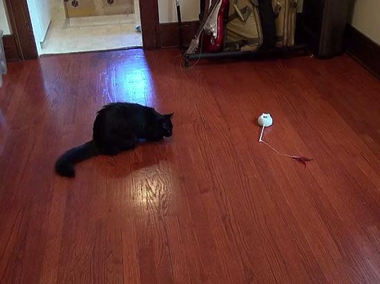 Маленький робот Mousr притворяется настоящей охотничьей добычей