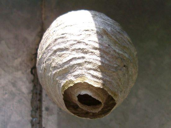 Пять простых способов: первая помощь при укусах насекомых