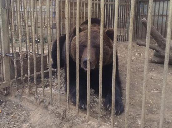 Добровольцы вывезли с Донбасса в Россию бесхозного медведя