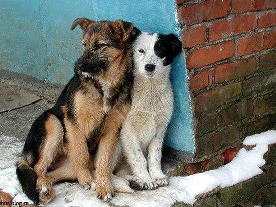 Около 10 тысяч бездомных собак проживают в Черноземье