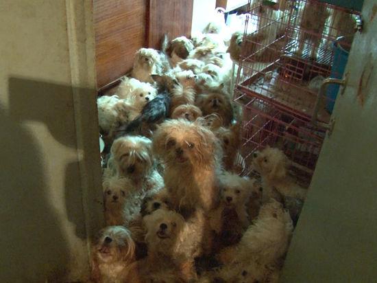 Москвичка держала в квартире более 200 собак