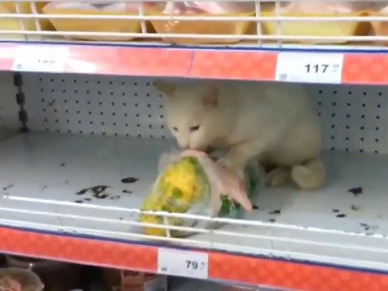 Приключения котов в магазинах: по всему миру сняли видео а-ля Владивосток